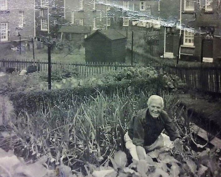 Allotments & Vegetable Gardens